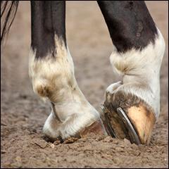 pattes cheval 3 et 17 a