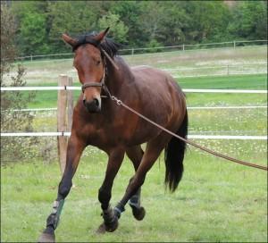 cheval longe 15