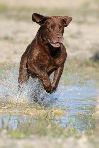 examen de santé vétérinaire