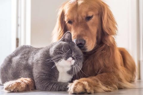 Examen annuel vétérinaire